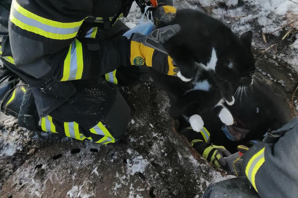 Durchgefroren und erschöpft: Feuerwehr rettet Kater Charlie aus Abflusskanal