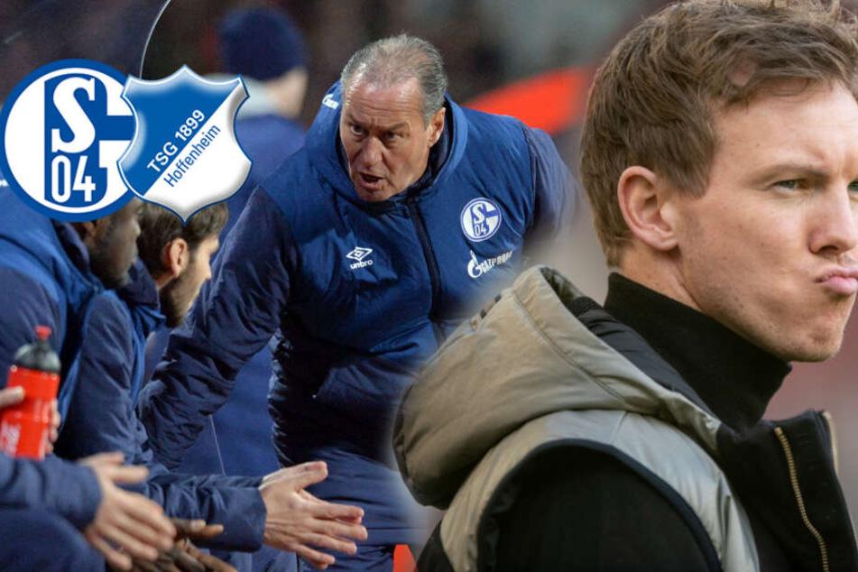 Schießt Hoffenheim Schalke weiter in Richtung Relegationsplatz?