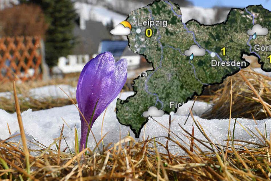 Der Frühling ist in den Startlöchern, aber Sonne und Wärme bleiben auf Abstand.
