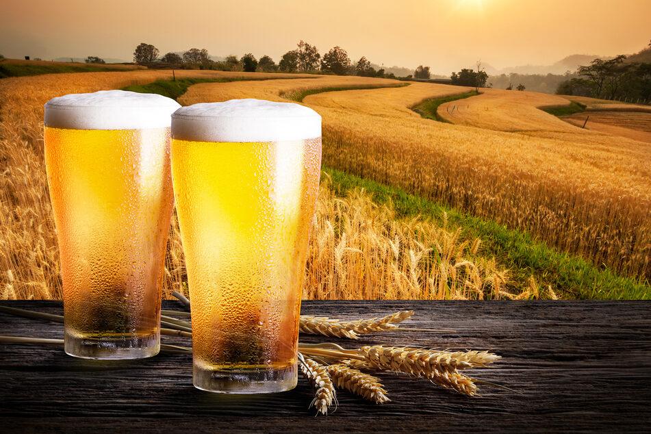 An zwei selbstgebrauten Bieren starb das Pärchen in Südafrika. (Symbolbild)