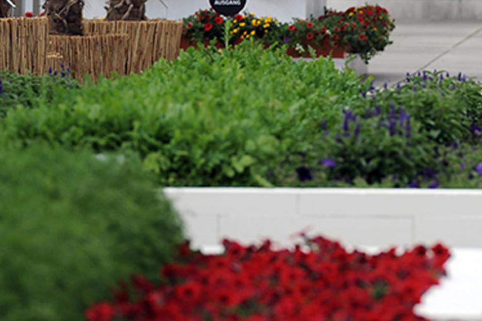 Mit Grünpflanzen wird dem Starkregen auf dem Leim gegangen. (Symbolbild)