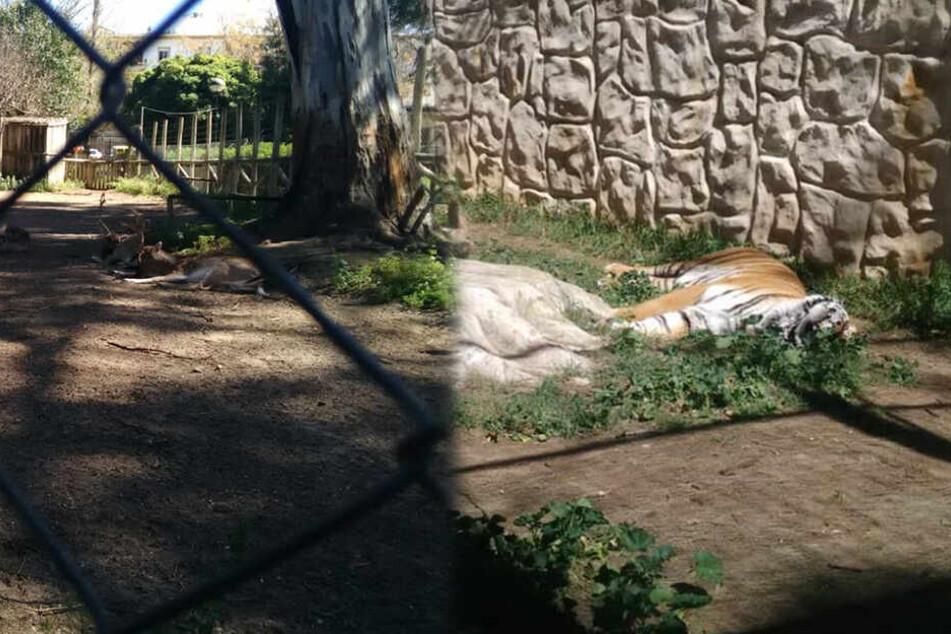 Dutzende Tiere dem Tod nah, weil sie in Zoo zurückgelassen werden