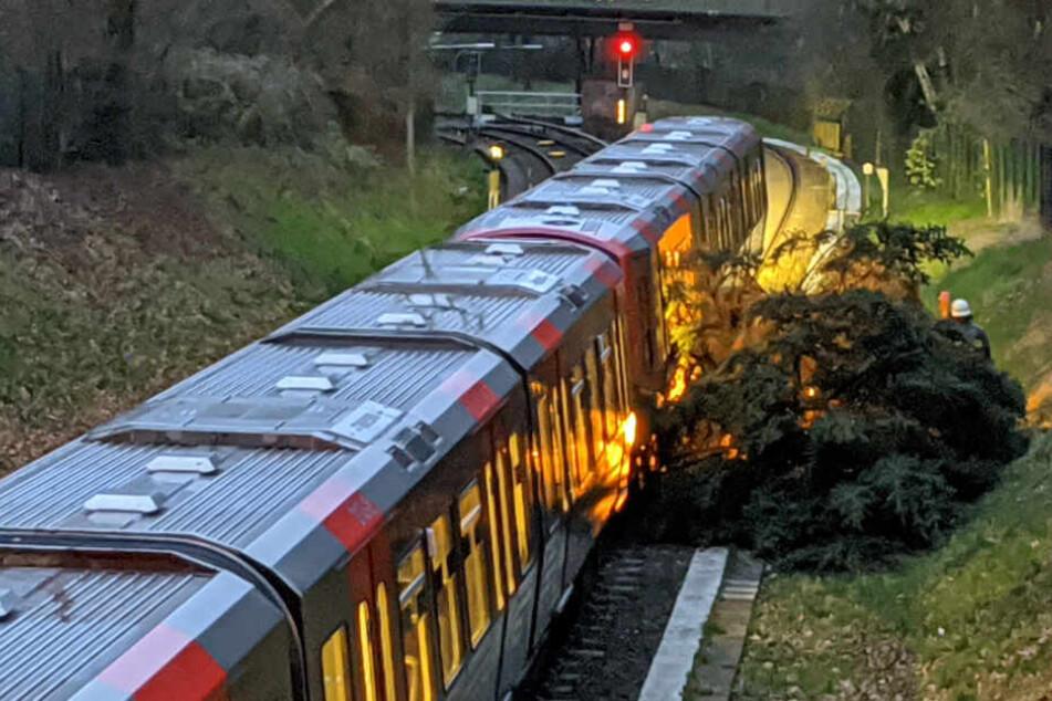 Ein Baum krachte auf der Linie U1 gegen eine U-Bahn.