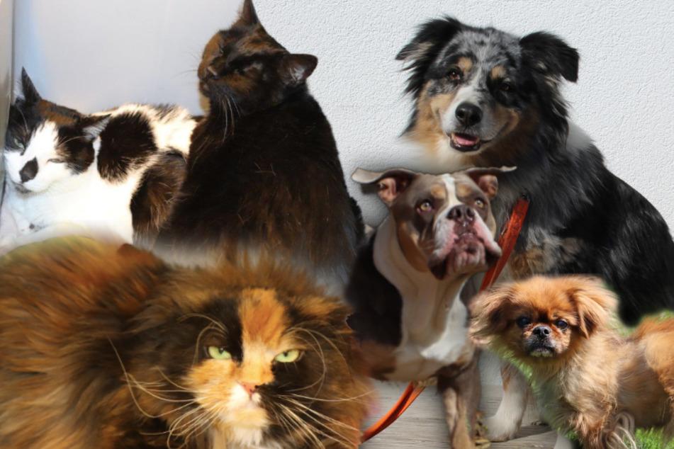 6 besondere Tiere: Diese Hunde und Katzen suchen endlich ein Zuhause