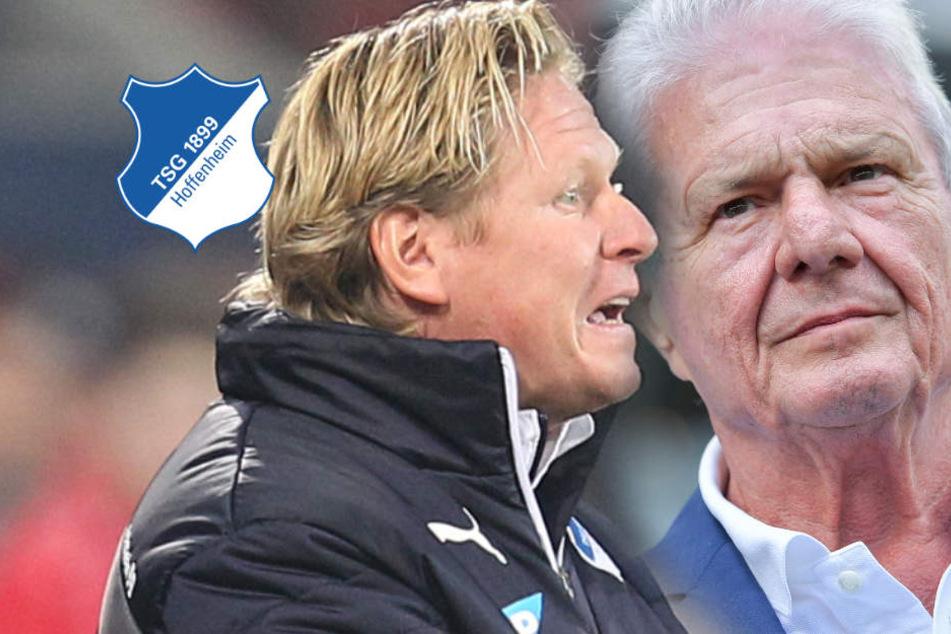 Nach BVB-Fan-Eklat: Hoffenheims Anwalt und Ex-TSG-Coach Gisdol fordern Konsequenzen