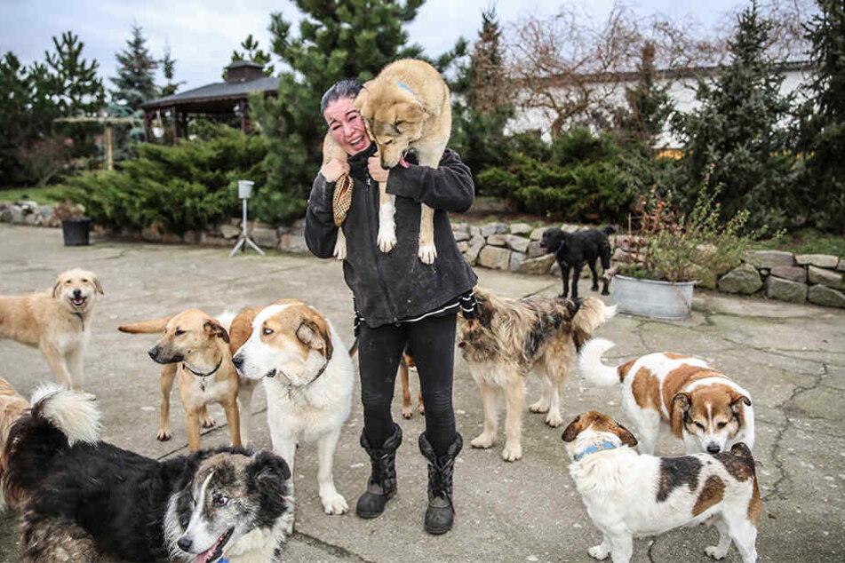 Ein Engel für arme Hunde: Tierschützerin Almuth Schneider (44) trägt ihre Schützlinge auch mal auf Schultern...