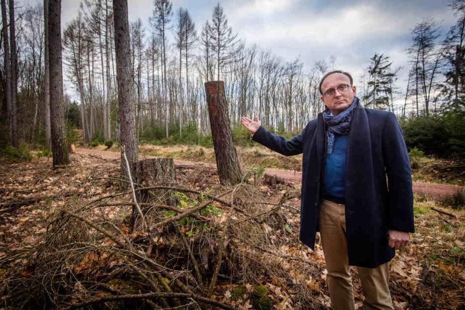 Angst vor Waldsterben: SPD fordert Fäll-Verbot im Chemnitzer Stadtforst