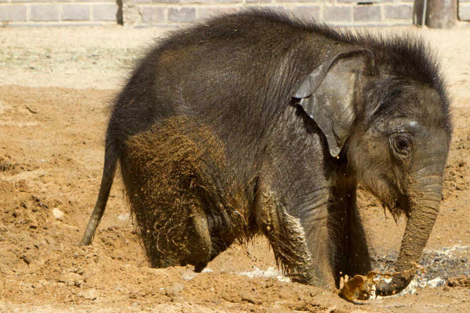 Mutter Hoa will es nicht: So geht es dem Leipziger Elefantenbaby