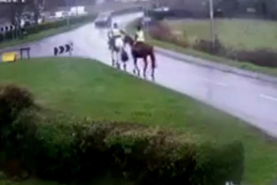 Schockvideo: Auto rammt mit voller Wucht zwei Pferde von der Straße