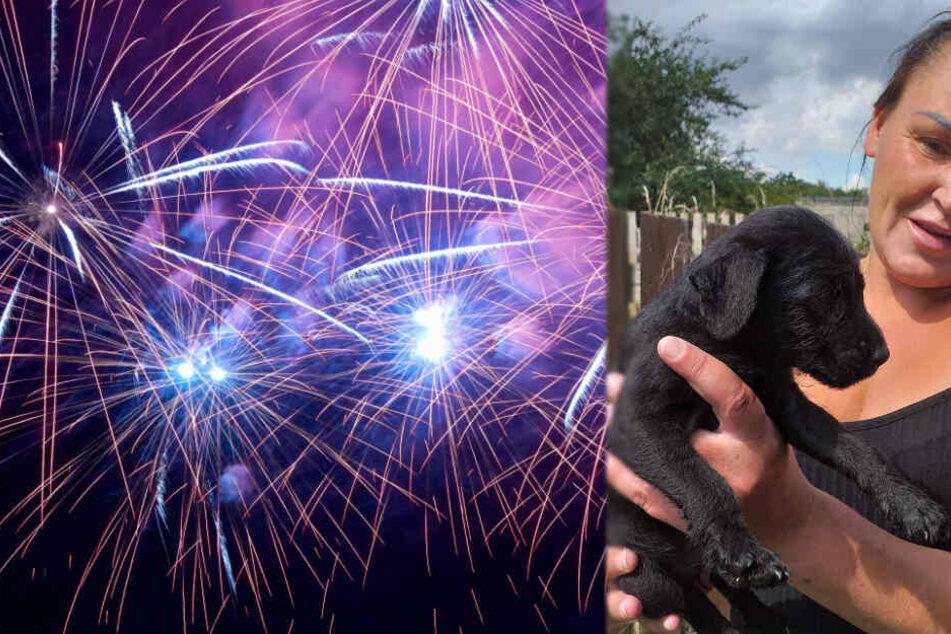 Susan Paterson verlor ihren Hund bei einem Feuerwerk.
