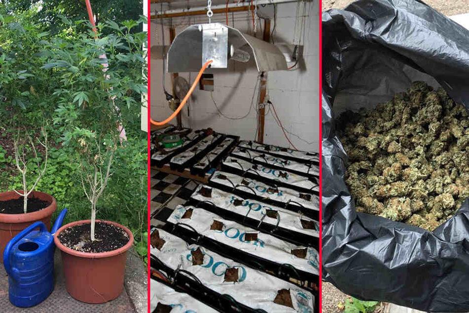 Die Beamten fanden eine professionell aufgebaute, bereits abgeerntete Indoor-Anlage zum Anbau von Cannabis und bereits geerntetes, abgepacktes Marihuana