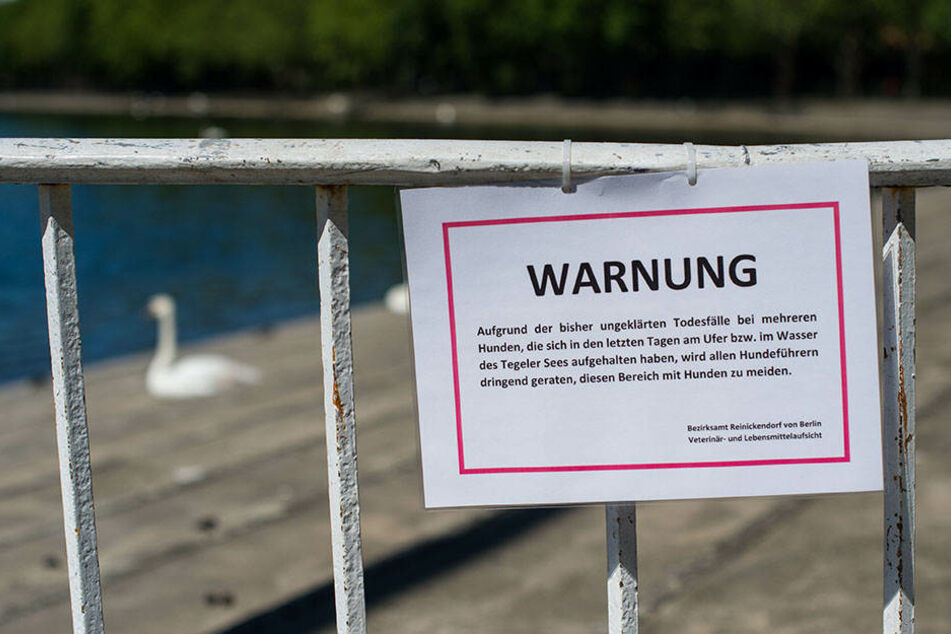 Ein offizielles Schild warnt die Besucher am Tegeler See vor möglichem Gift.