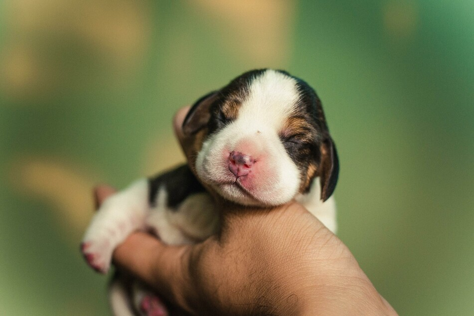 Kann man seinen Hund mit Herpes anstecken? | TAG24