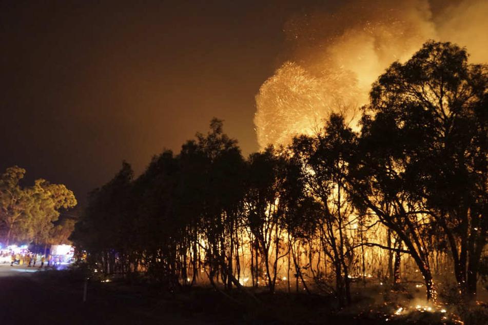 In Australien toben derzeit mehr als 120 Buschfeuer!