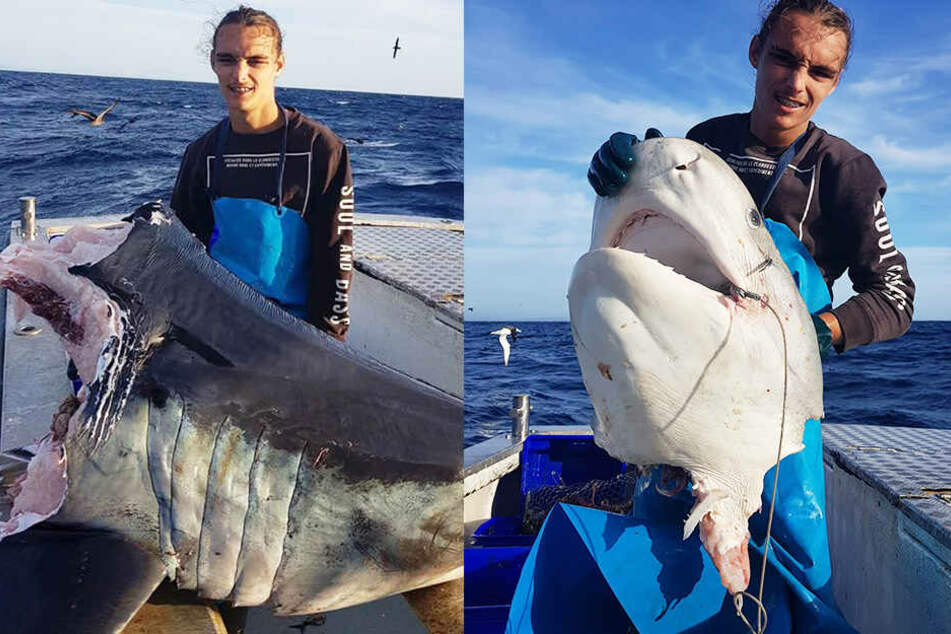 Krasse Bilder: Fischer zieht 100 Kilo schweren Hai-Kopf aus dem Meer