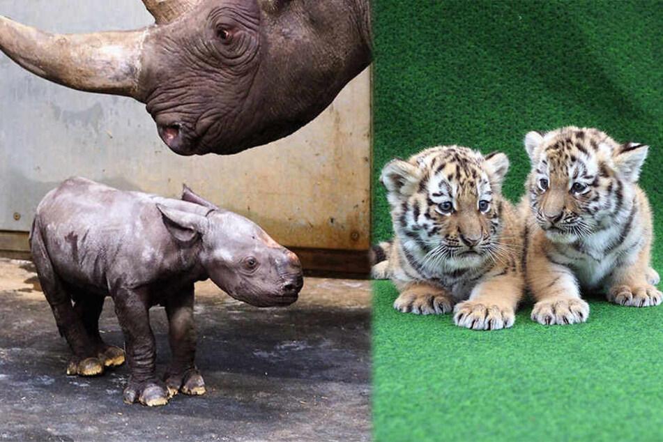 Zahlreiche Tierbabys gibt es im Zoo zu entdecken.