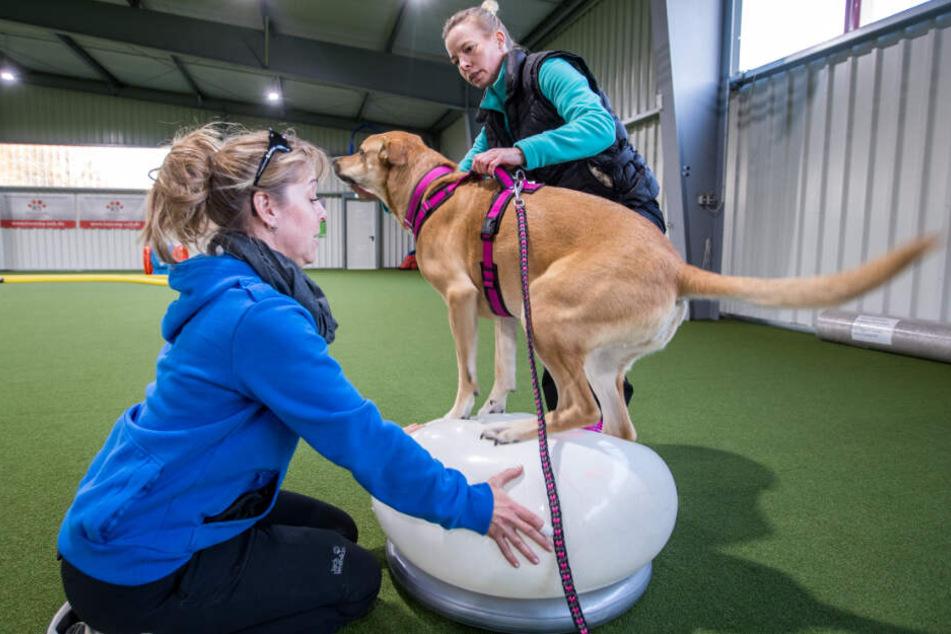 "Hundetrainerin Katja Ince (links) trainiert mit Hund ""Lulu"" und Besitzerin Anja Müller."