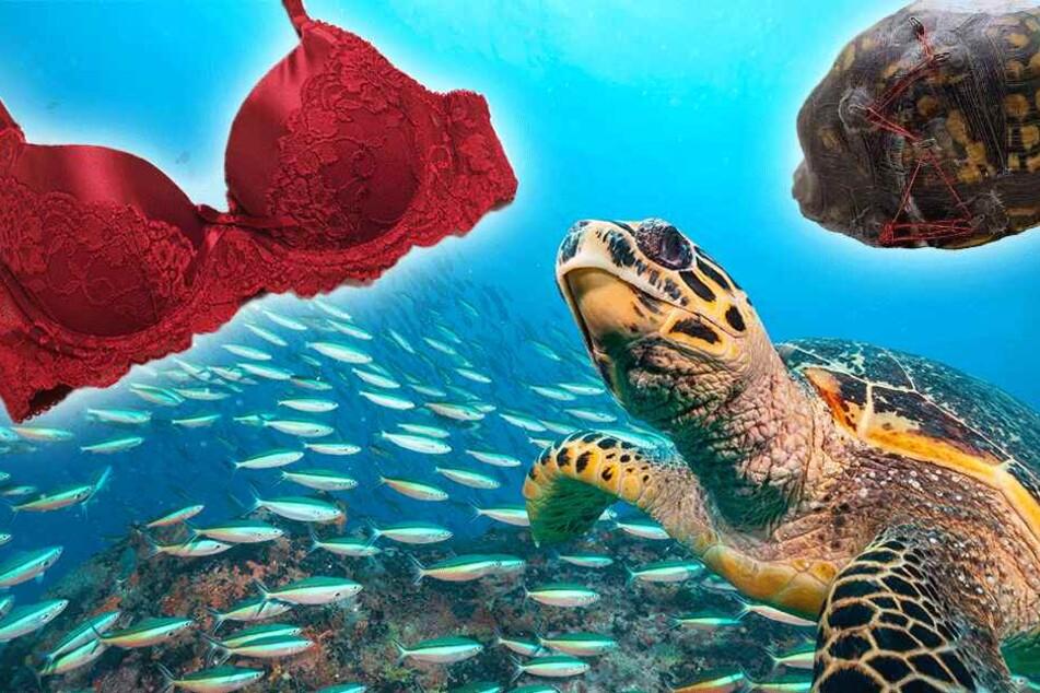 Carolina Waterfowl Rescue repariert Schildkröten-Panzer auf sehr ungewöhnliche Art und Weise.