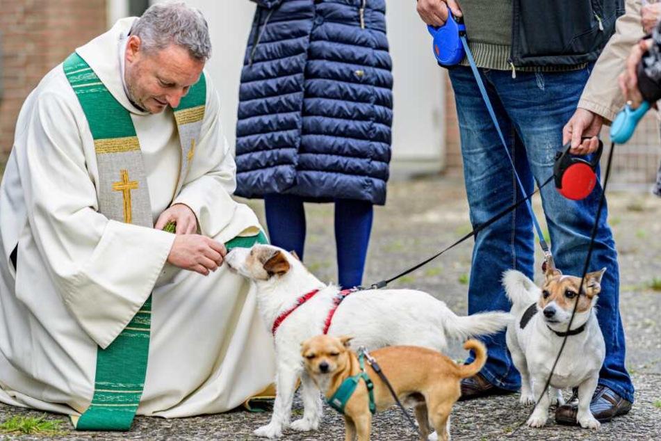 Tierischer Gottesdienst! Dieser Priester segnet in Hamburg Hunde