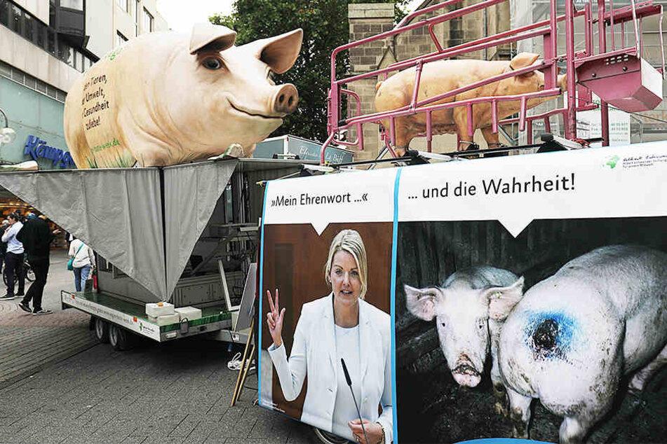 Tierschützer sind entsetzt über die Zustände in dem Schweinemastbetrieb.