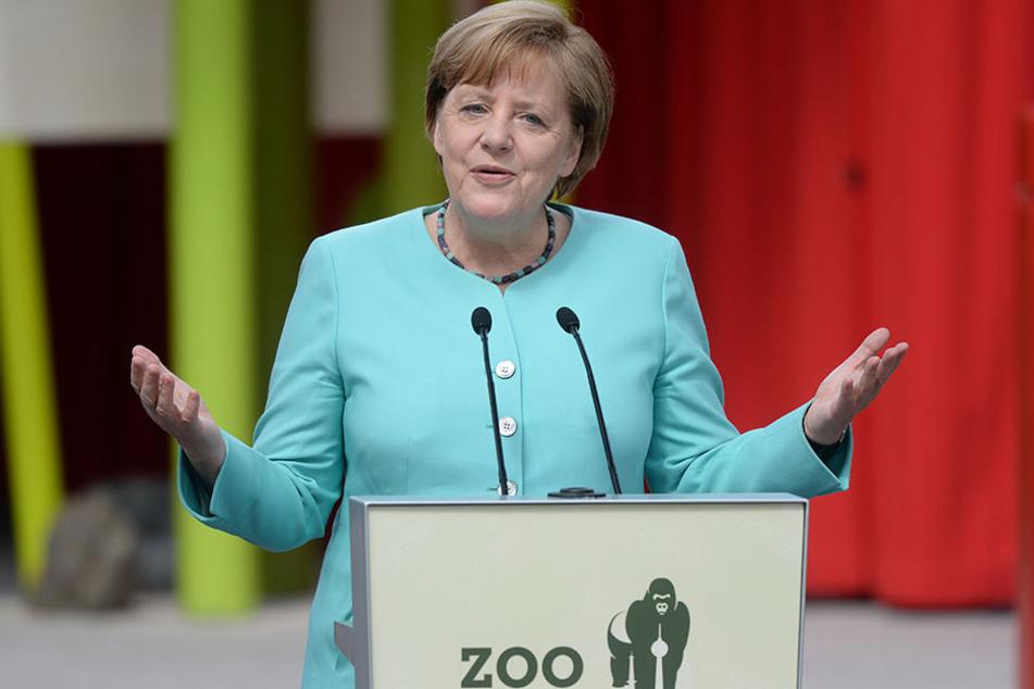 Bundeskanzlerin Angela Merkel (CDU) bei der Eröffnung der neuen Anlage für zwei Pandabären im Zoo Berlin.