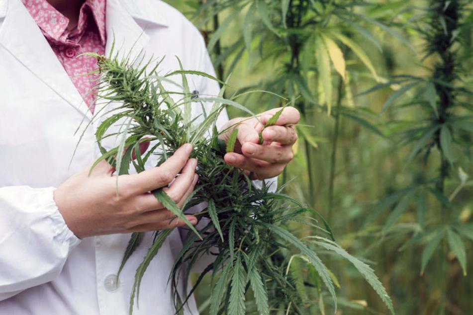 Trotz Legalisierung halten sich die Vorurteile gegen Cannabis.