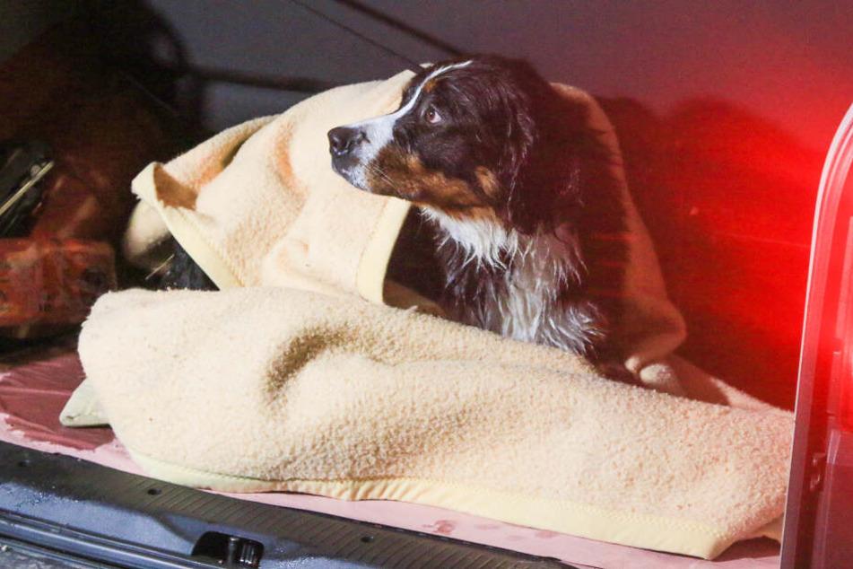Tragischer Rettungseinsatz! Hunde brechen in eiskalten See ein, ein Tier stirbt im Wasser