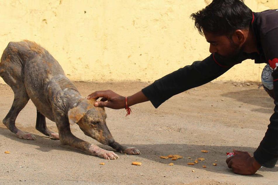 Jyoti hatte bei ihrer Rettung schreckliche Angst vor den Tierschützern.
