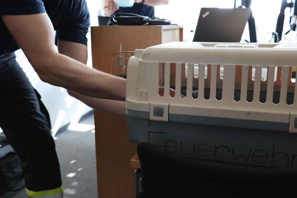 Der Papagei wurde in eine Transportbox gesetzt und später dem Tierschutz übergeben.