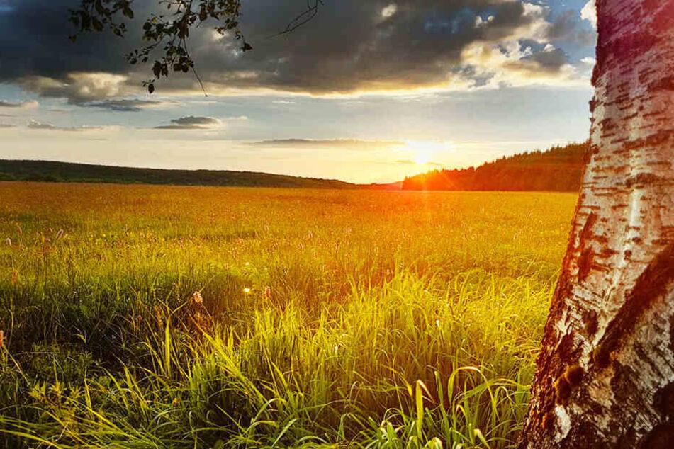 Wiesen beherbergen ein Drittel aller Tier- und Pflanzenarten Deutschlands.