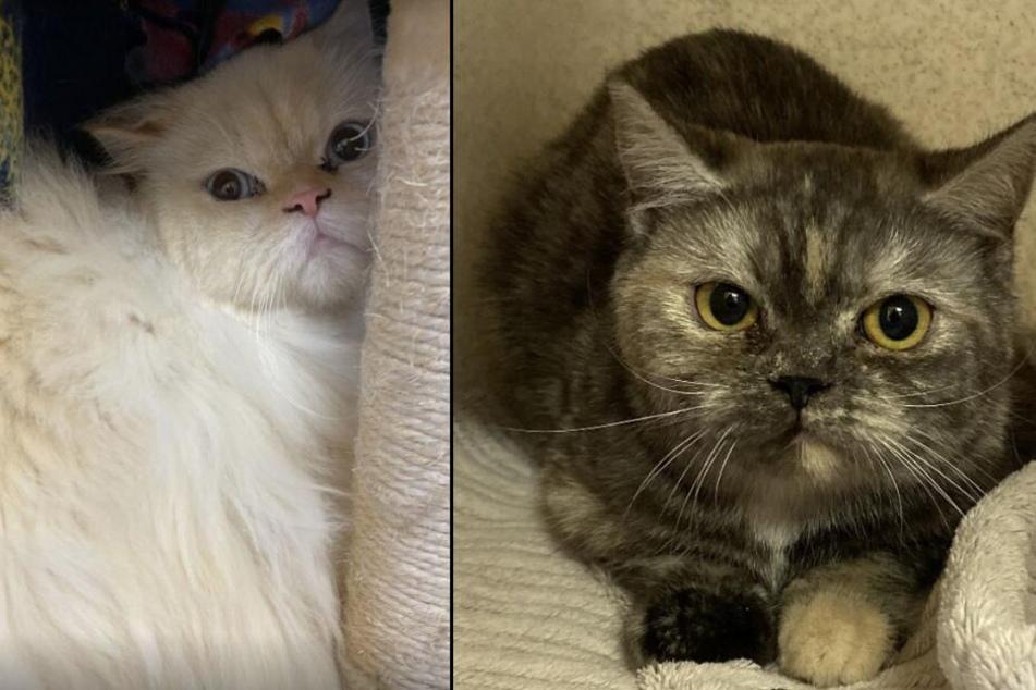 Zwei der 48 geretteten Katzen.