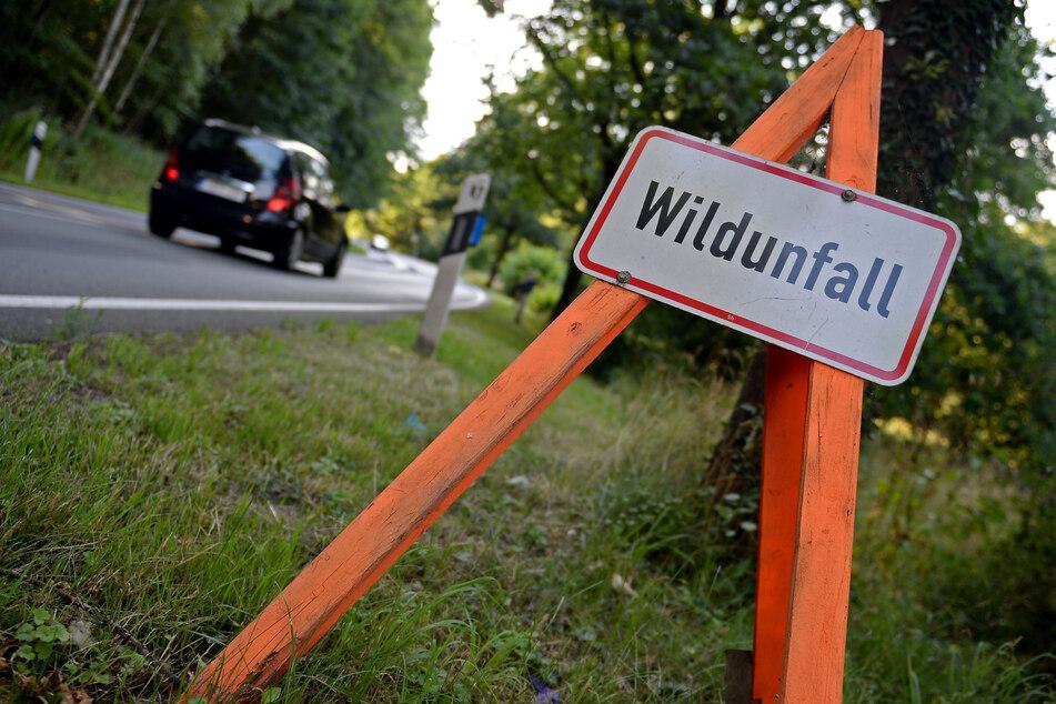 Hirsch schleudert bei Unfall auf Auto: Fahrer stirbt noch vor Ort!