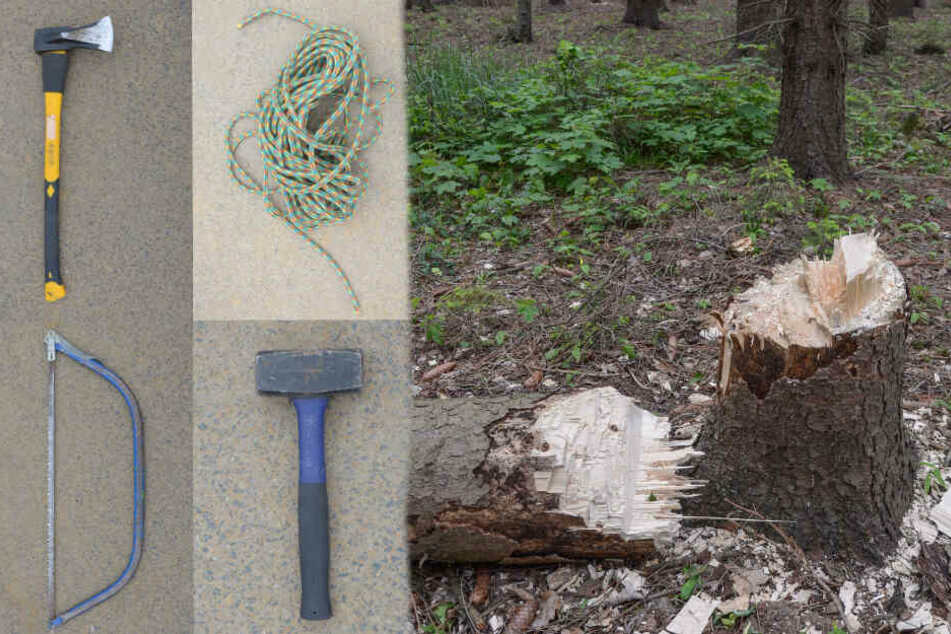 Bäume im Hambacher Forst gefällt! Waren es wieder Besetzer?