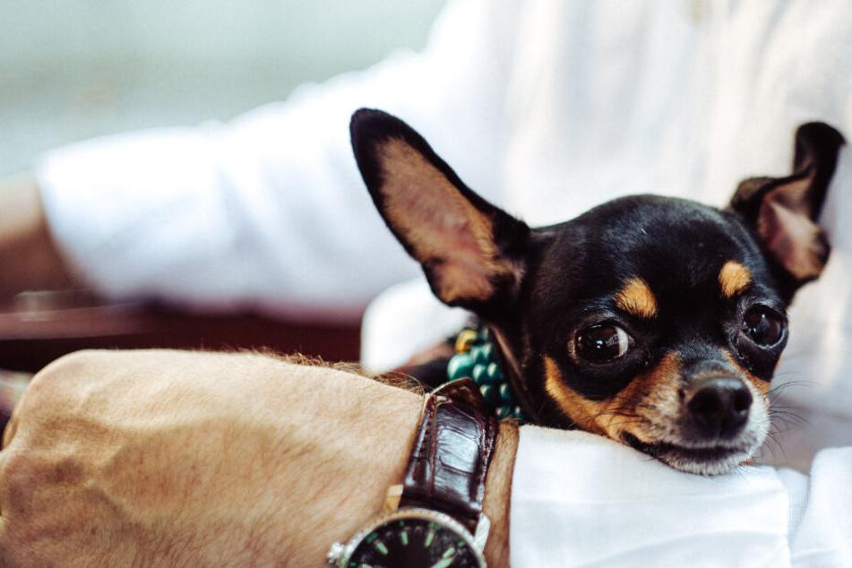 3 Dinge, die Euer Hund absolut nicht leiden kann