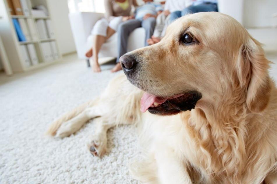 Die meisten Besitzer sehen ihr Haustier als vollwertiges Familienmitglied an. (Symbolbild)