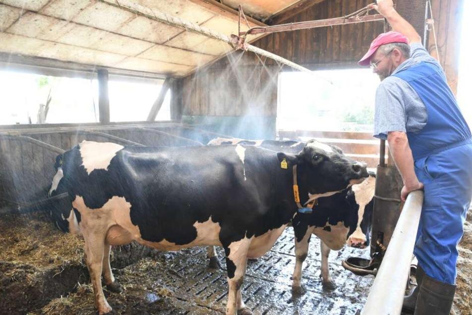 Die Milchbauern leiden weiter unter den Dürre-Folgen: In 2019 könnte es weniger Milch geben. (Symbolbild)