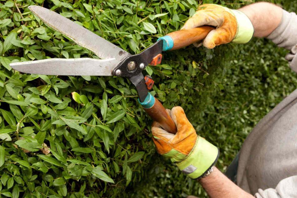 Der Mann war gerade mit Gartenarbeit beschäftigt, als er getroffen wurde. (Symbolbild)
