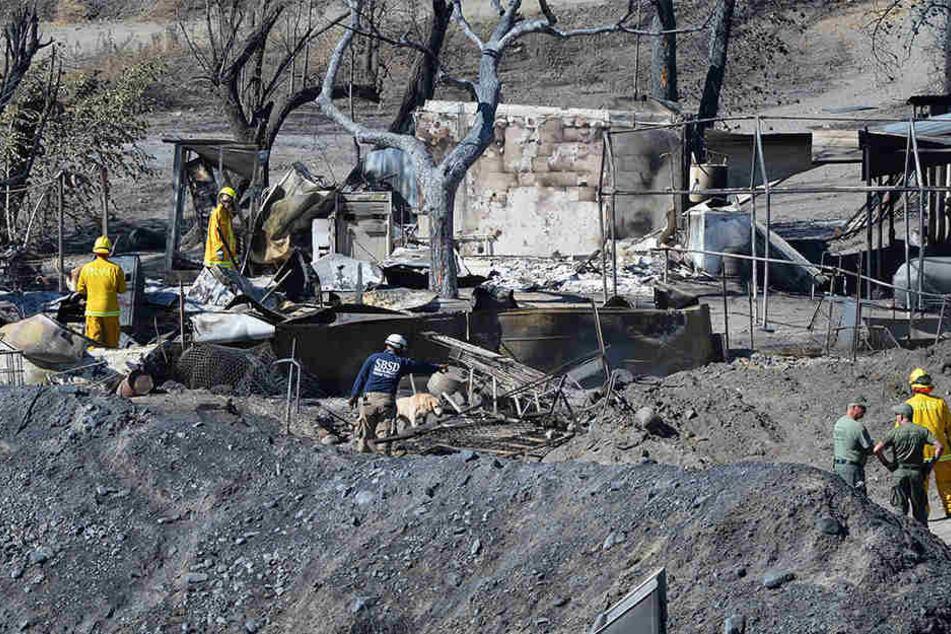 Heftige Busch-und Waldbrände haben im Süden Kaliforniens hunderte Gebäude zerstört.