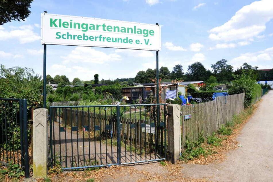 Tatort Kleingartenanlage Schreberfreunde: Hier stellten Mitglieder einen Einbrecher.