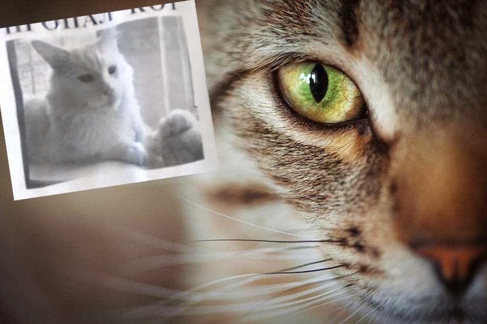 Der Blick einer Katze auf einem Suchplakat (kl. Foto) macht den Betrachter verrückt.
