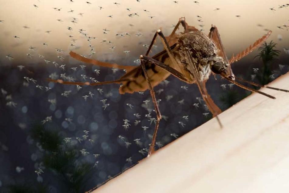 Riesige Mückenschwärme suchen gerade in unseren Häusern Plätze zum Überwintern.