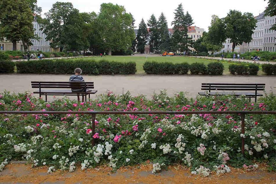 Die Blumen-Rabatten am Wilhelmsplatz in Görlitz laden zum Verweilen und Pausieren. Daniel T. (27) riss hier haufenweise Tulpen raus.