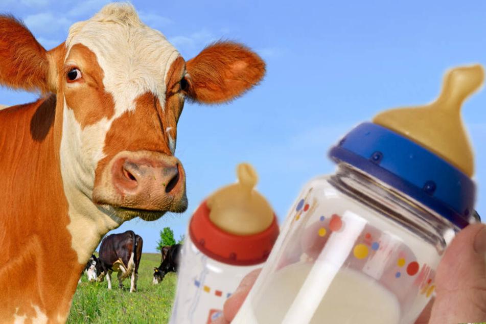Kann der weltweite Vertrieb von hochqualitativem Milchpulver den Milchbauern zu mehr Einnahmen verhelfen?