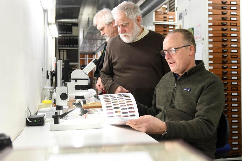 Die Käfersammler Michael von Bressensdorf (r-l), Hans Mühle und Franz Wachtel betrachten in der Zoologischen Staatssammlung München (Bayern) einen Katalog mit abgebildeten Käfern.