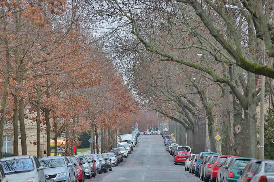 Die Bäume an der Reichenbachstraße erlauben keinen Einsatz von Streusalz.