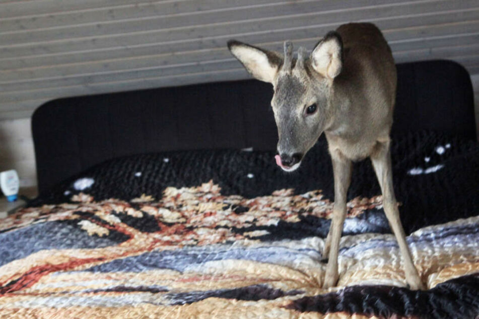 """""""Bambi"""" schlief in einem Körbchen im Schlafzimmer des Ehepaares."""