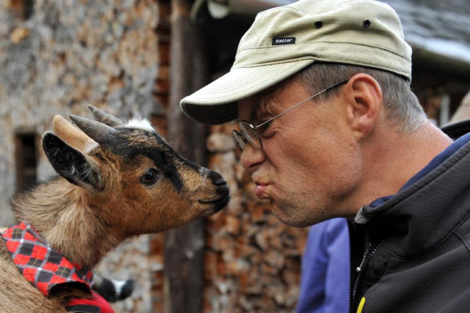 In Steinbach wird die schönste Ziege gekürt. Ob Pauline gewinnt, fragt sich Wildbach-Wirt Mario Eberlein.
