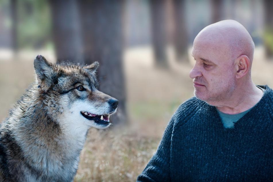 Zwei einsame Wölfe im Spreewald: Thorsten Krüger (Christian Redl) und der Wolf.