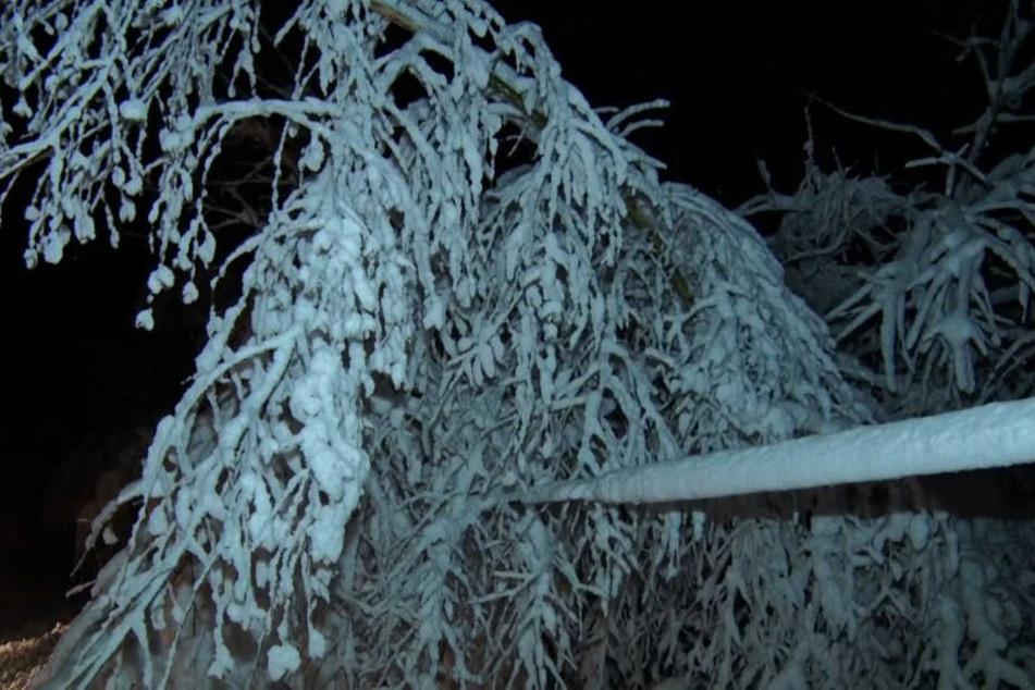 Bereits seit Mittwoch sind die Bäume an die Belastungsgrenze gestoßen. Doch es kündigt sich noch mehr Schnee an.