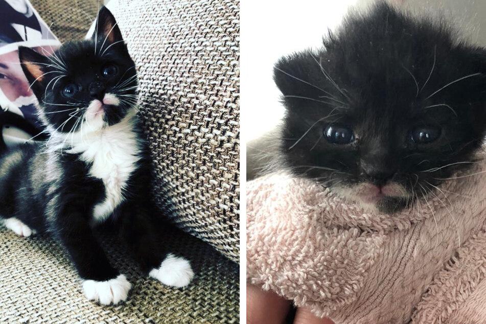 Inzwischen ist der kleine Kater Garfield, der einen so schweren Start ins Leben hatte, sieben Wochen alt.